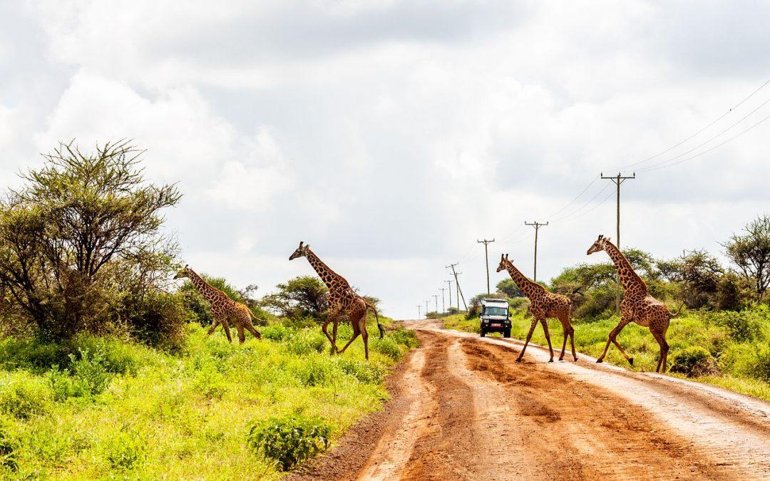 La nature sauvage et contrastée du Kenya