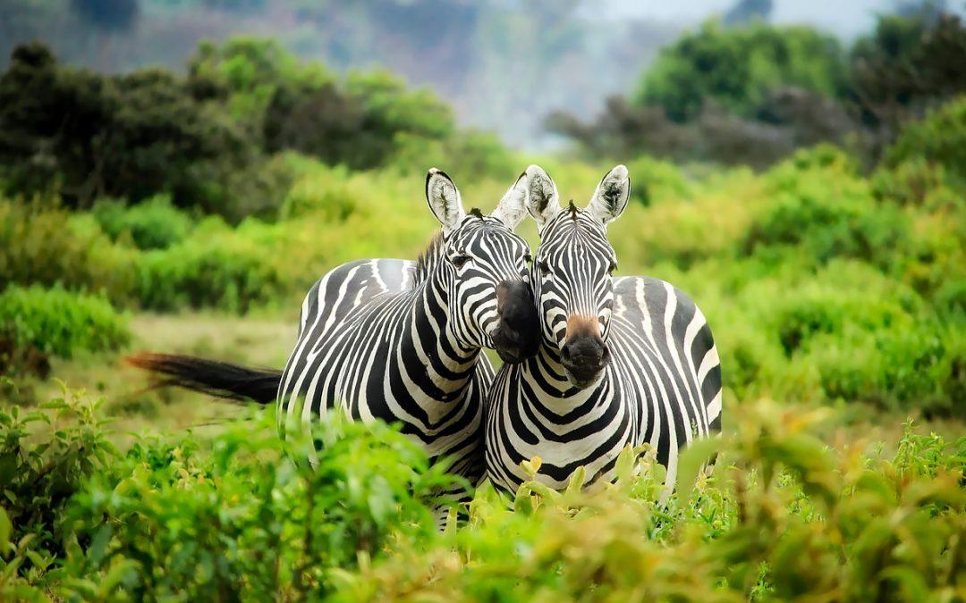 Un voyage au Kenyapour découvrir un bout de l'Afrique