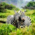 Le Kenya